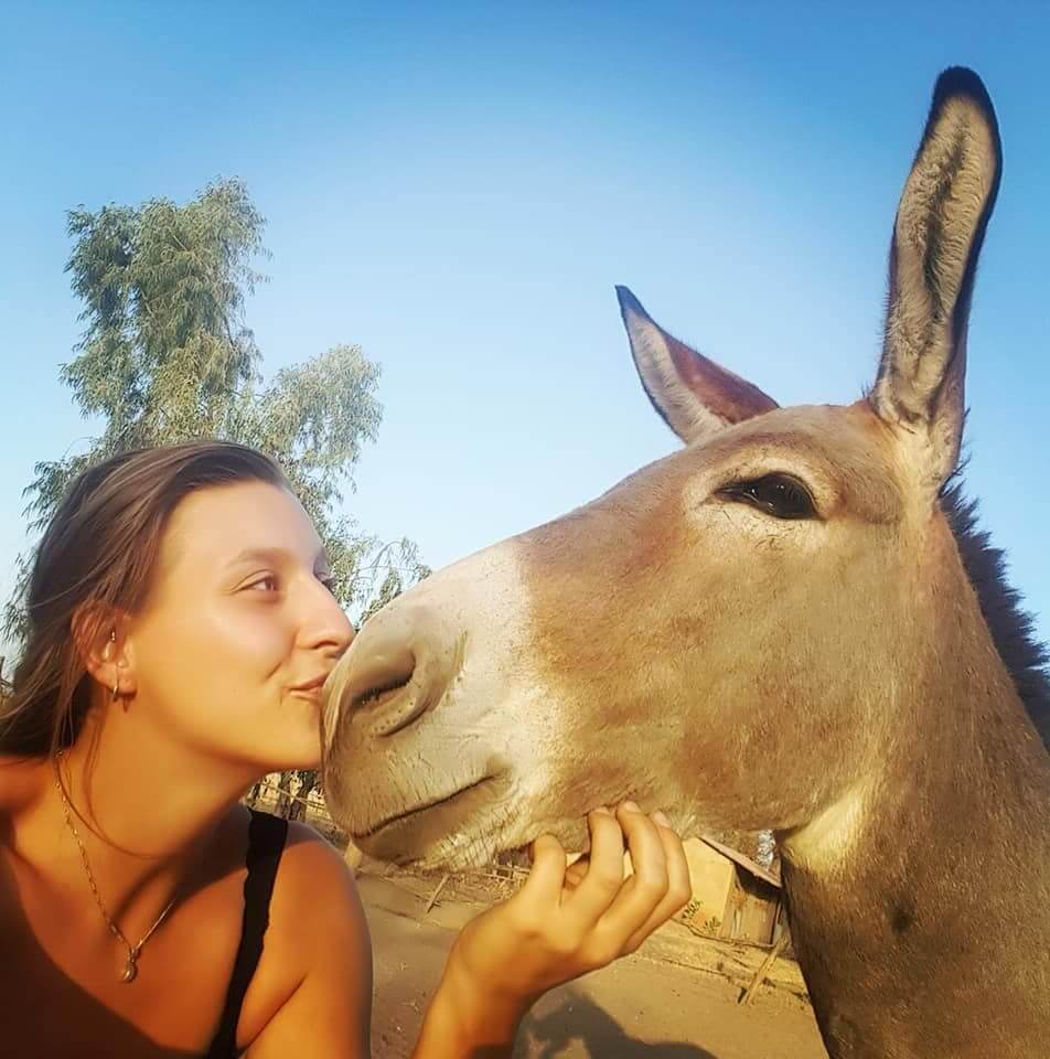 Gambia Horse and donkey trust