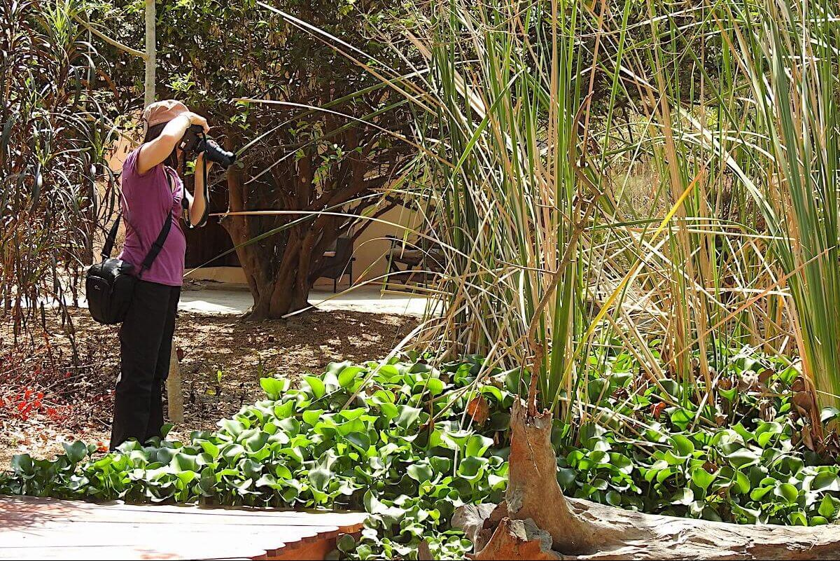 Photography in our reed bed