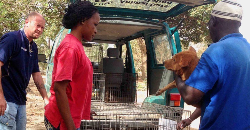 Écolodge Footsteps Gambie   charité   Sauvetage de chien ACA TNR