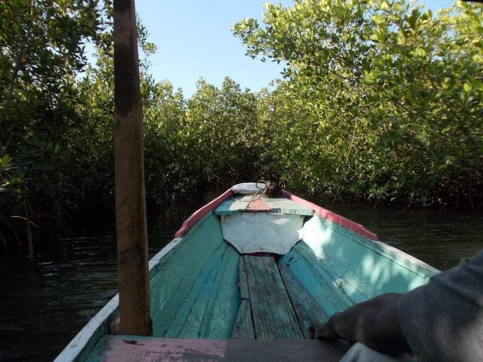 Bootsfahrt durch die Mangroven