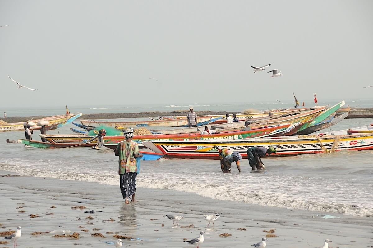 Pirogues in Gambia